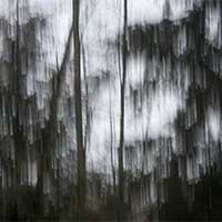 photography of forest trees in the rain